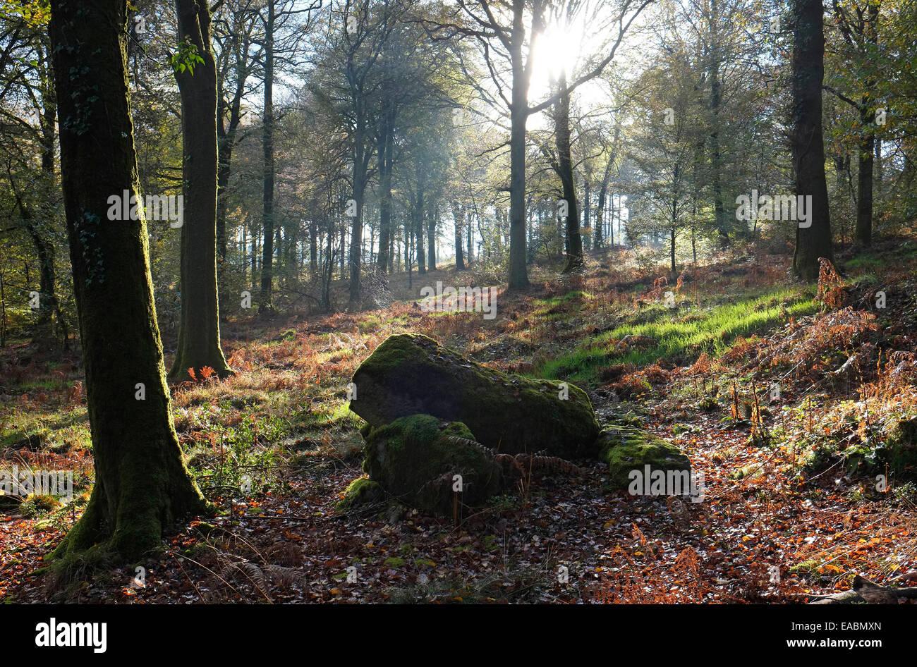 st sever forest, calvados region, normandy, france - Stock Image