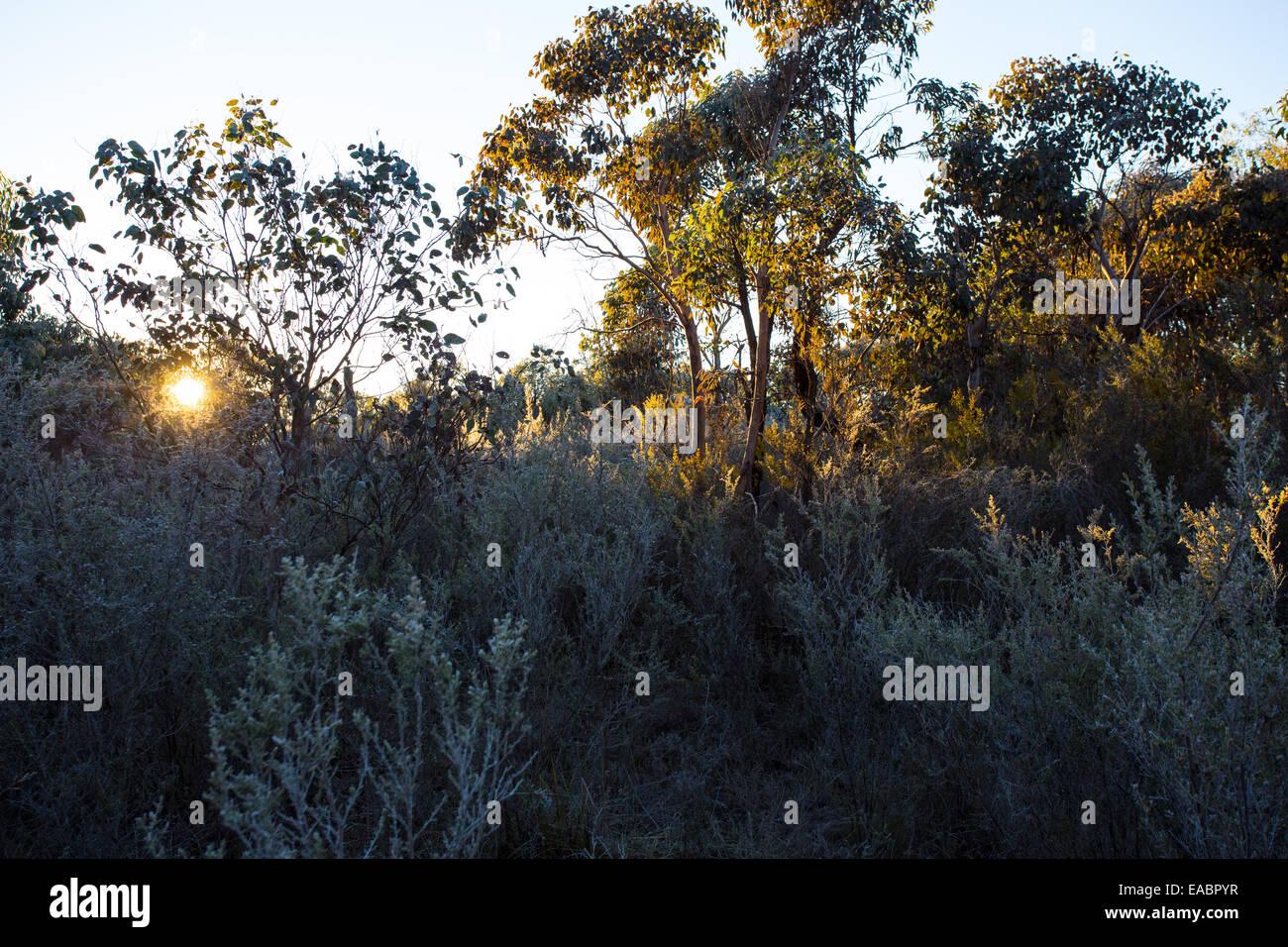 Bushland in Kings Plains National Park, NSW, Australia - Stock Image