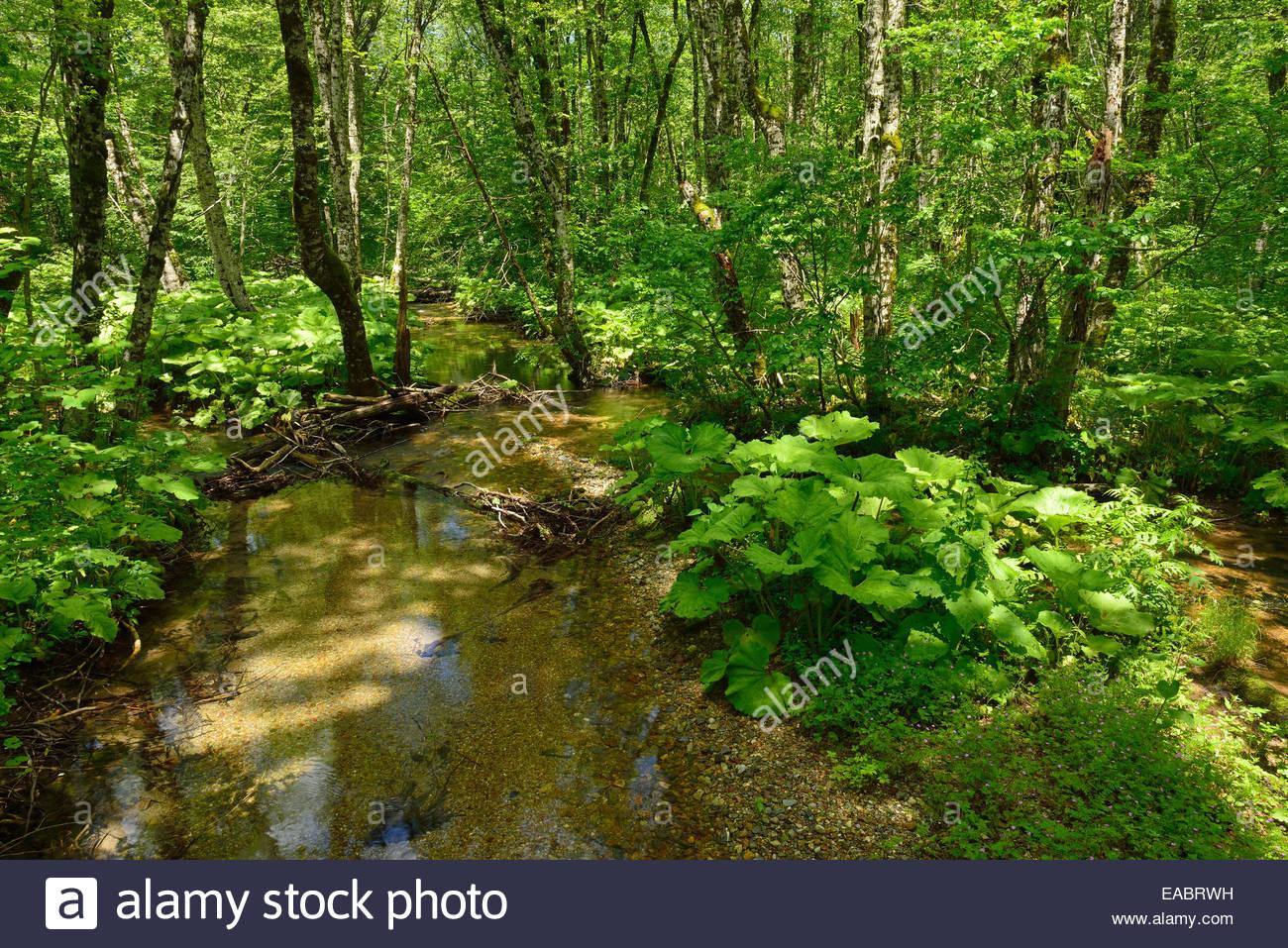 Montenegro Crna Gora wetland ecosystem Biogradsko Jezero National Park - Stock Image