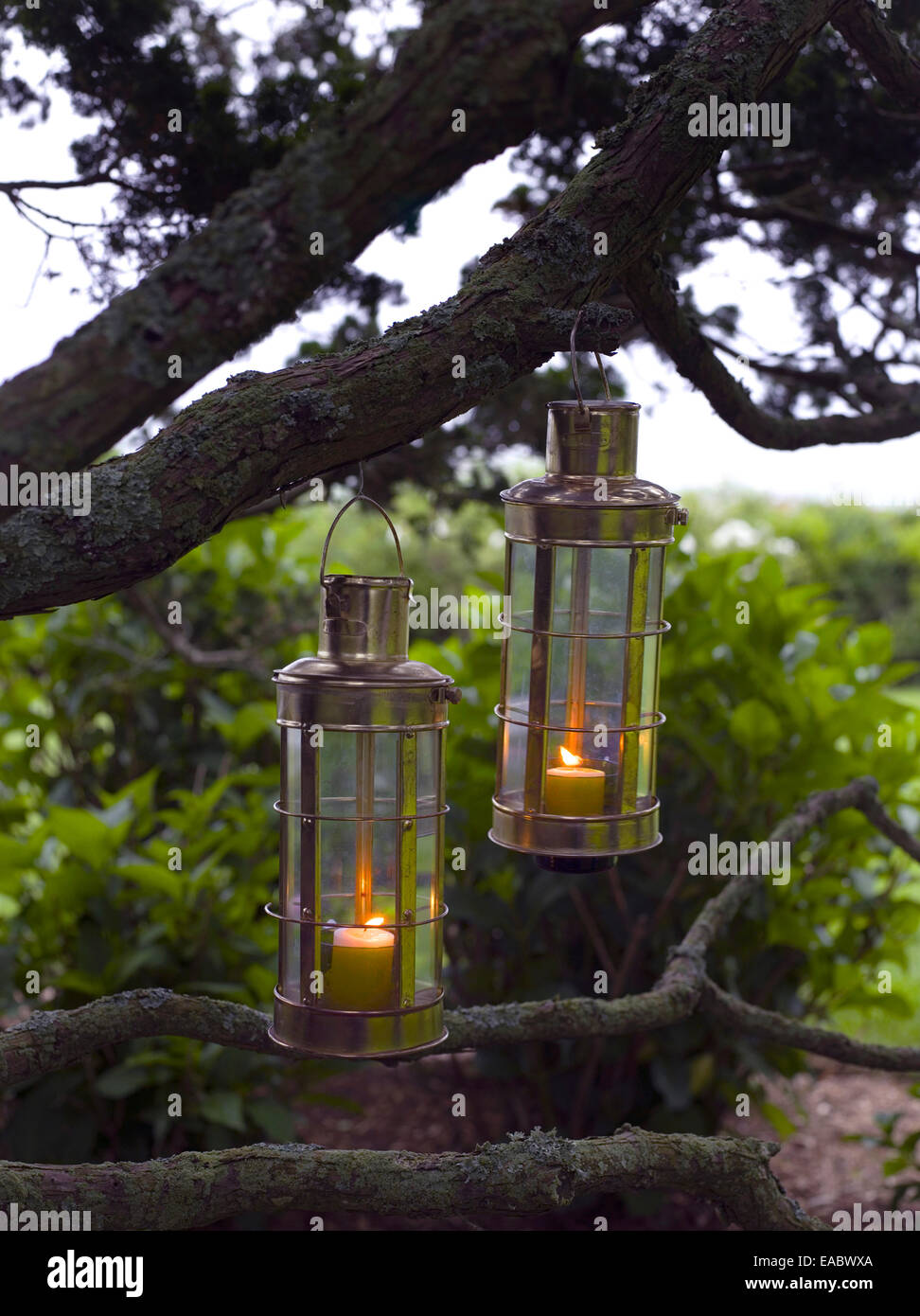 candles in lanterns hanging from tree at dusk - Stock Image