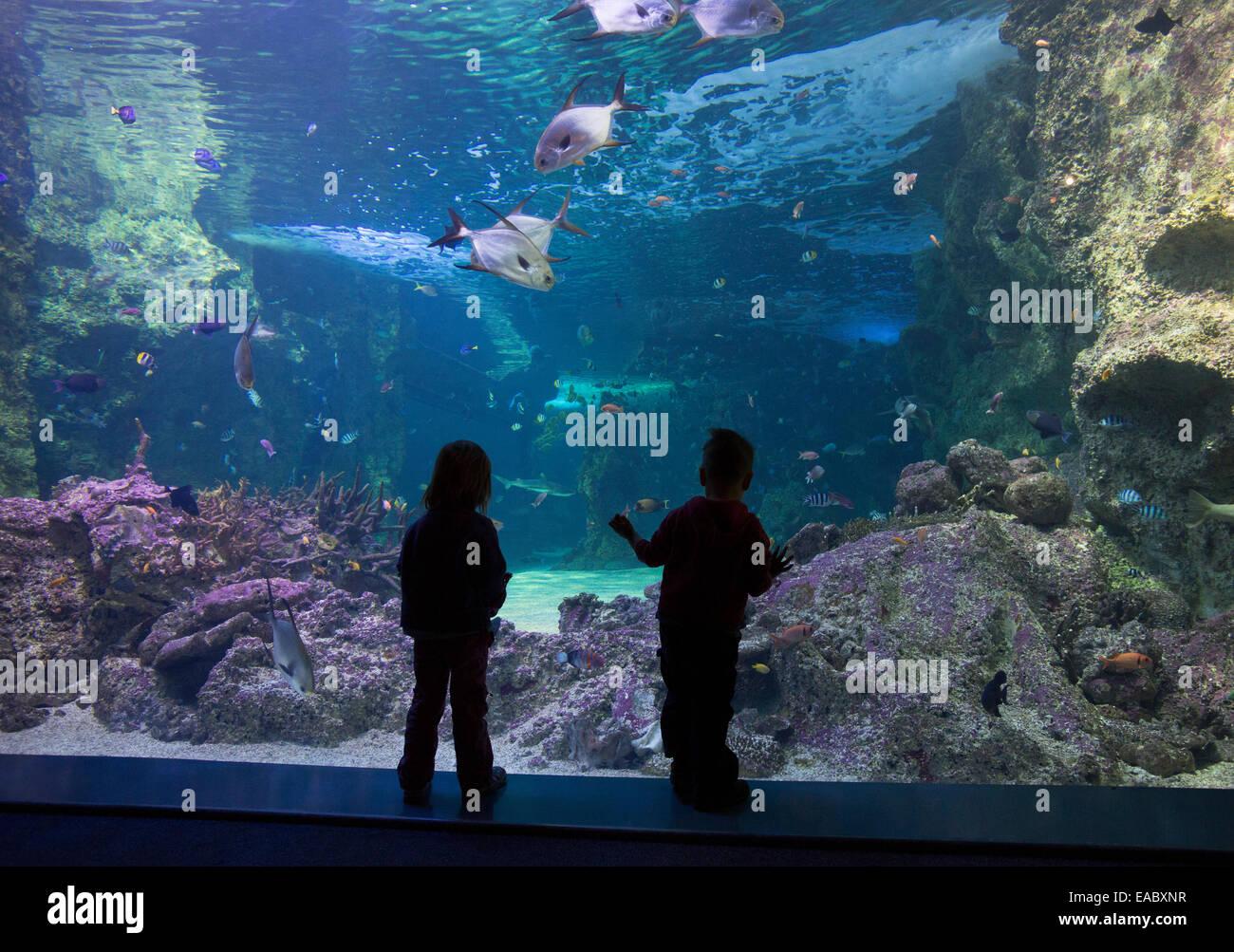 Silhouette of children looking at the Great Barrier Reef aquarium in the Sydney Sea Life Aquarium, Darling Harbour, - Stock Image