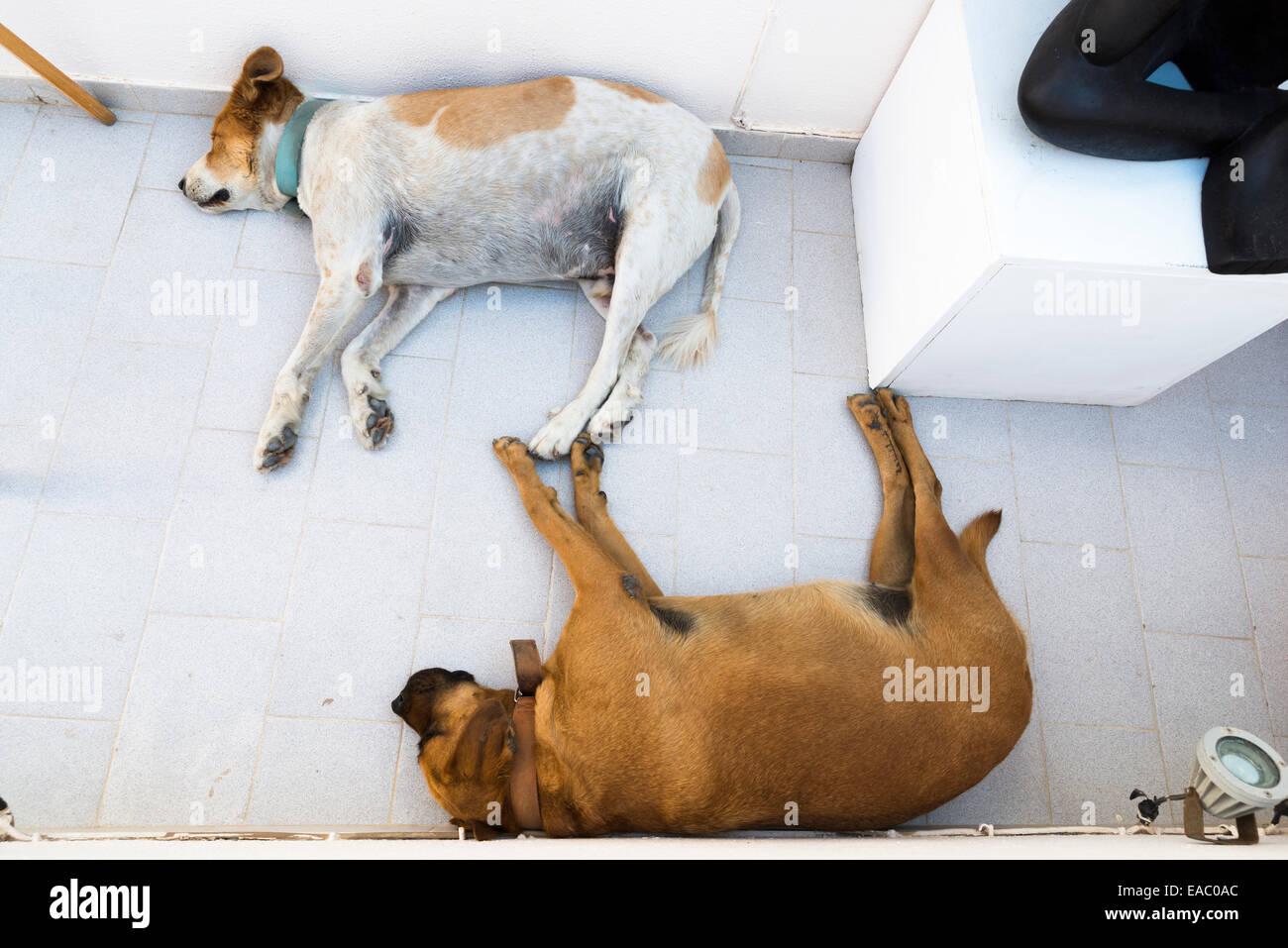 Two sleeping dogs, Oia, Santorini, Greece - Stock Image