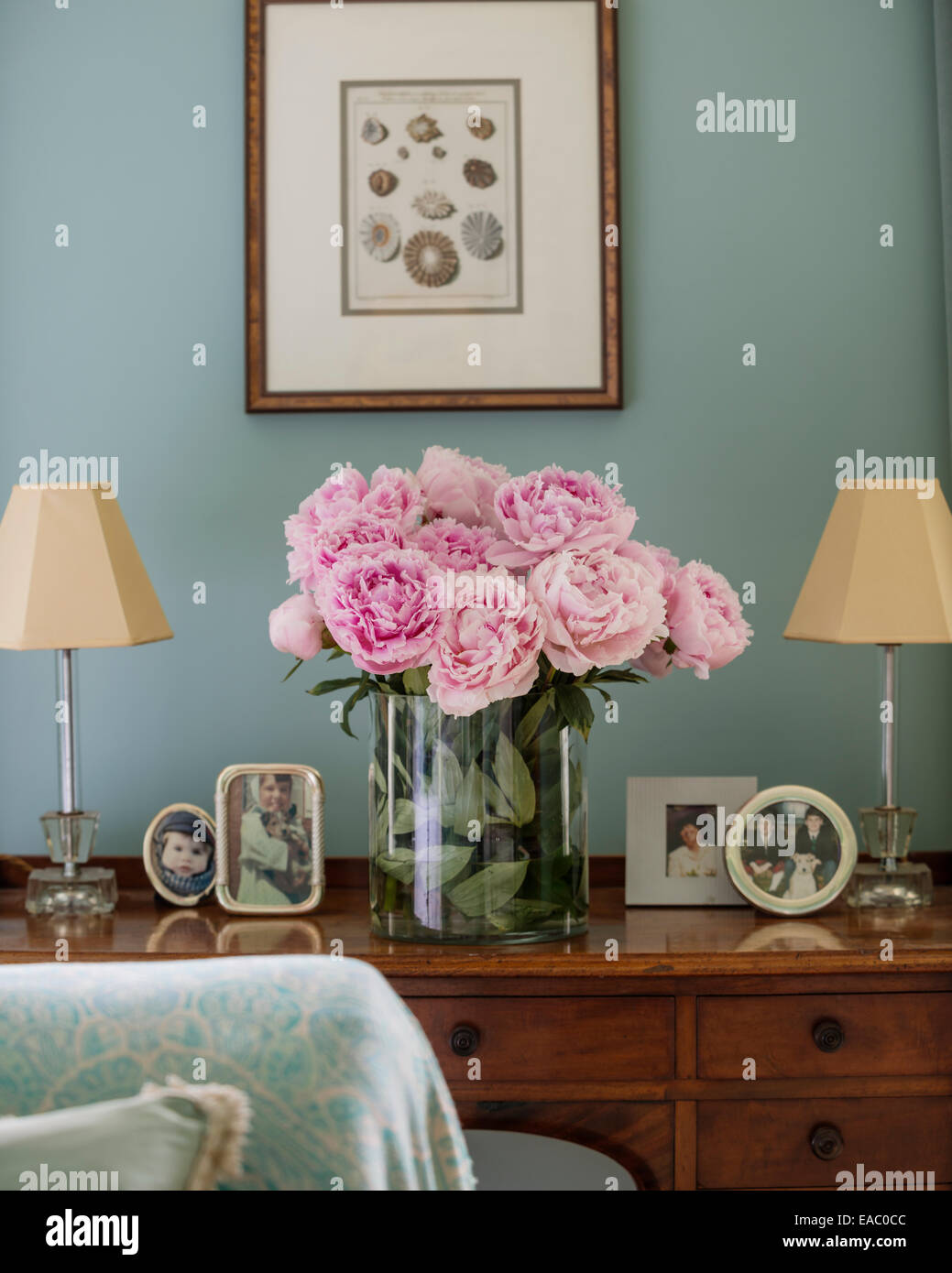 Pink peonies on antique dressing table with framed photos and small lamps - Stock Image