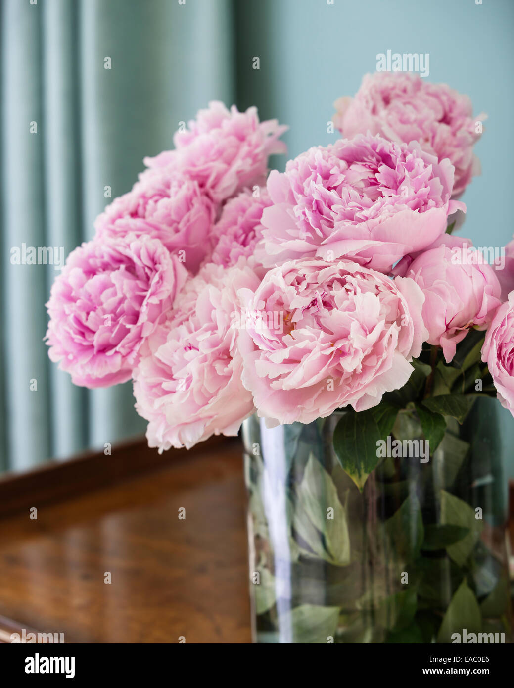 Pink peonies in glass vase - Stock Image