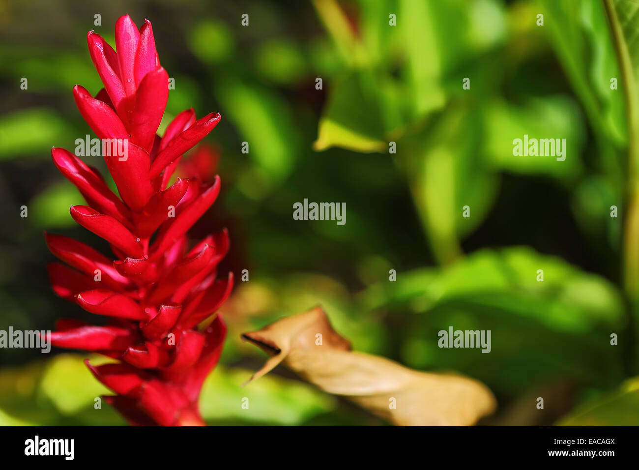Beautiful tropical plants and flowers grow on the big island of beautiful tropical plants and flowers grow on the big island of hawaii izmirmasajfo