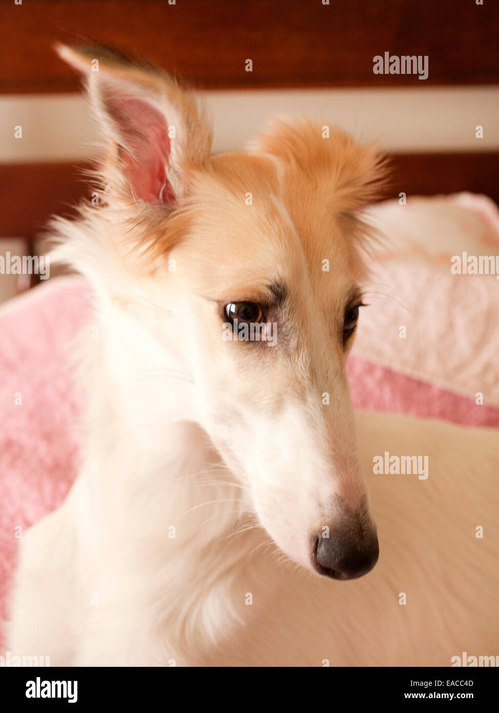 dog, pup, puppy - Stock Image