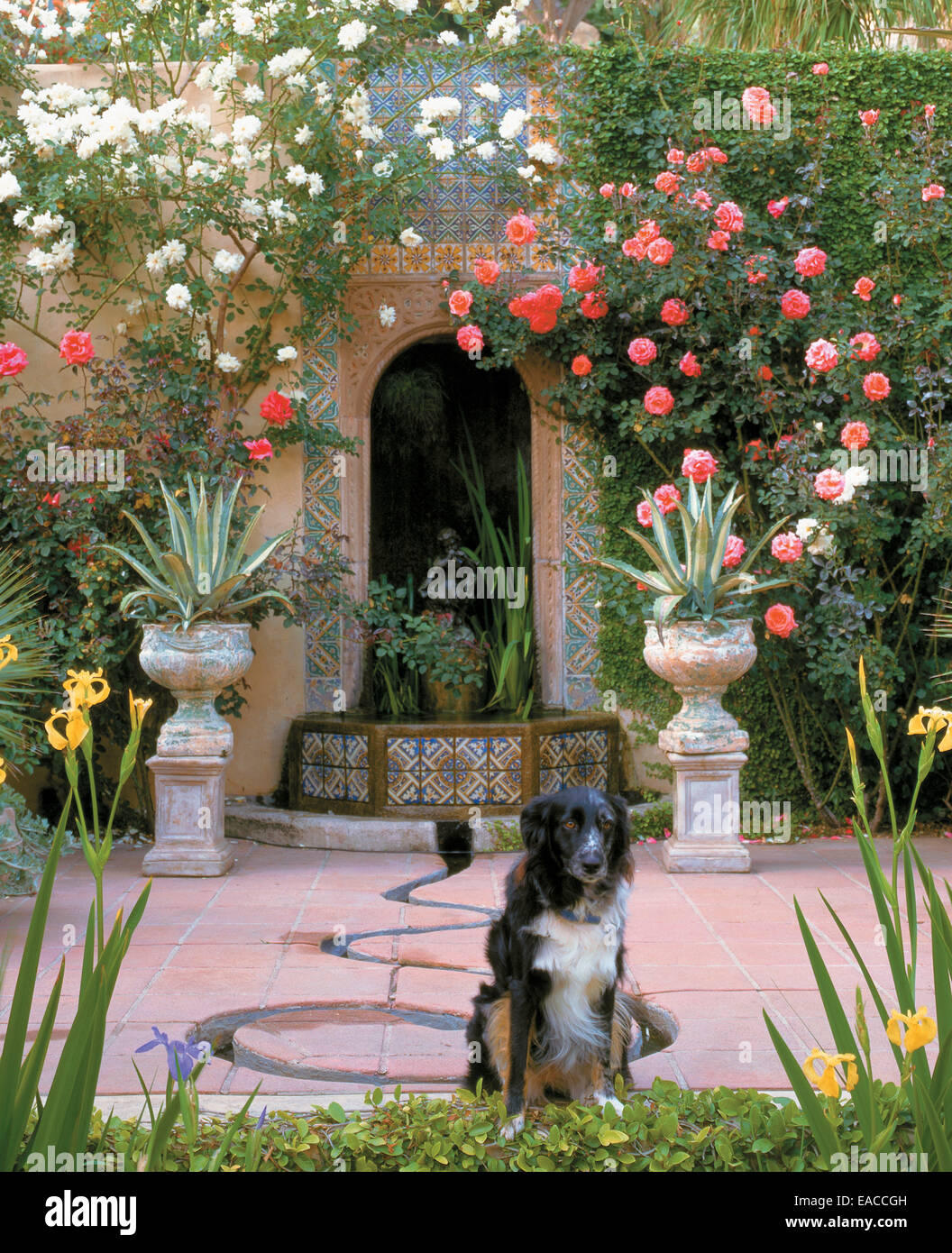 dog in flowering garden - Stock Image