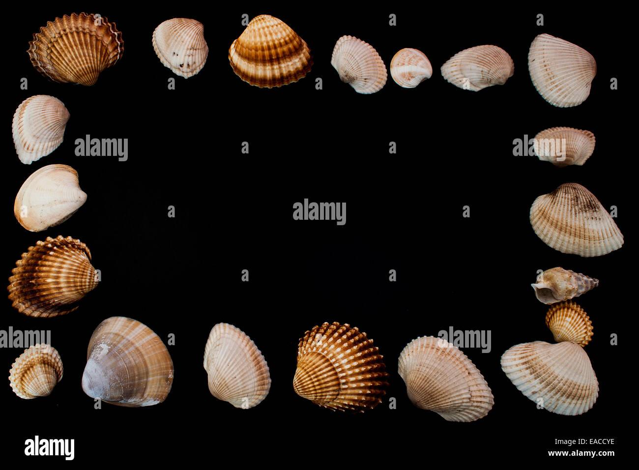 sea shells - Stock Image