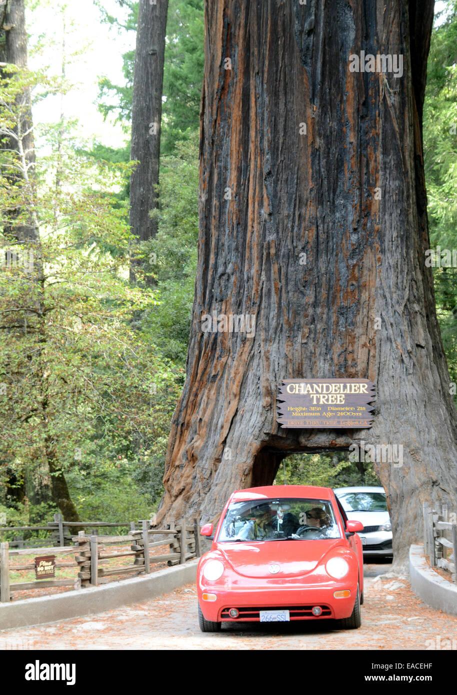 Chandelier tree redwood stock photos chandelier tree redwood stock the chandelier tree california stock image arubaitofo Gallery