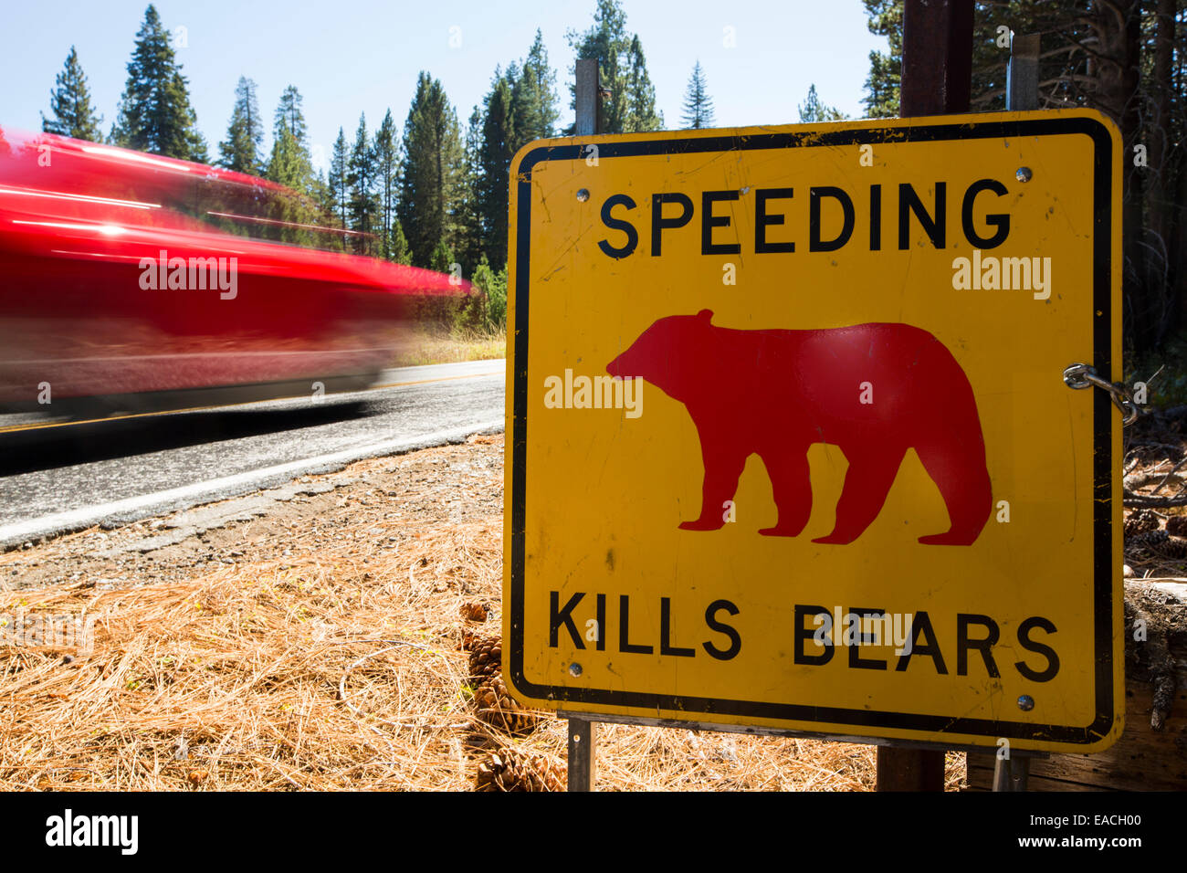 A yellow Spped kills bears sign in Yosemite National Park, each sign marks a spot where a bear has been killed by - Stock Image