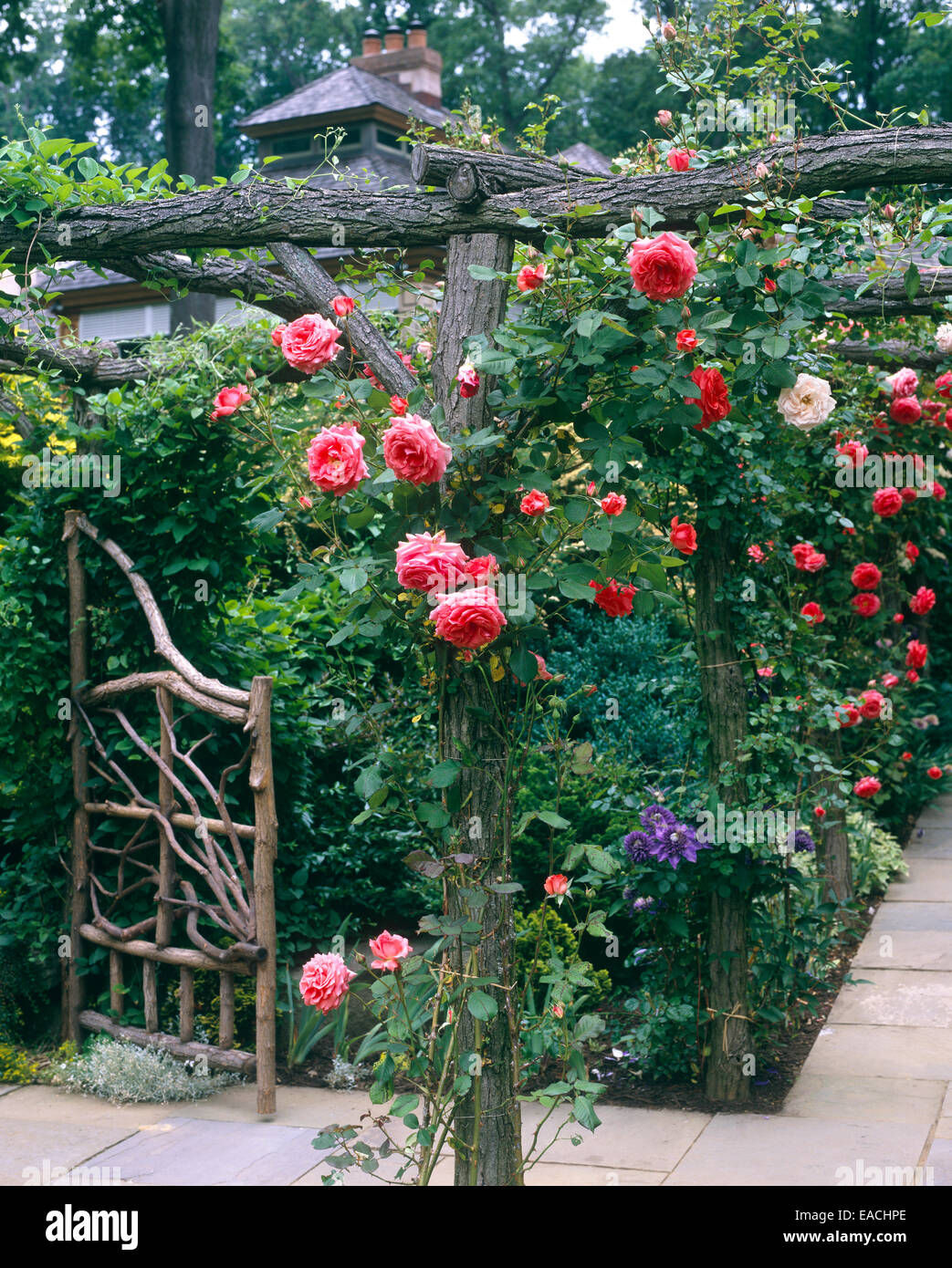 garden with roses and slate pathways Stock Photo