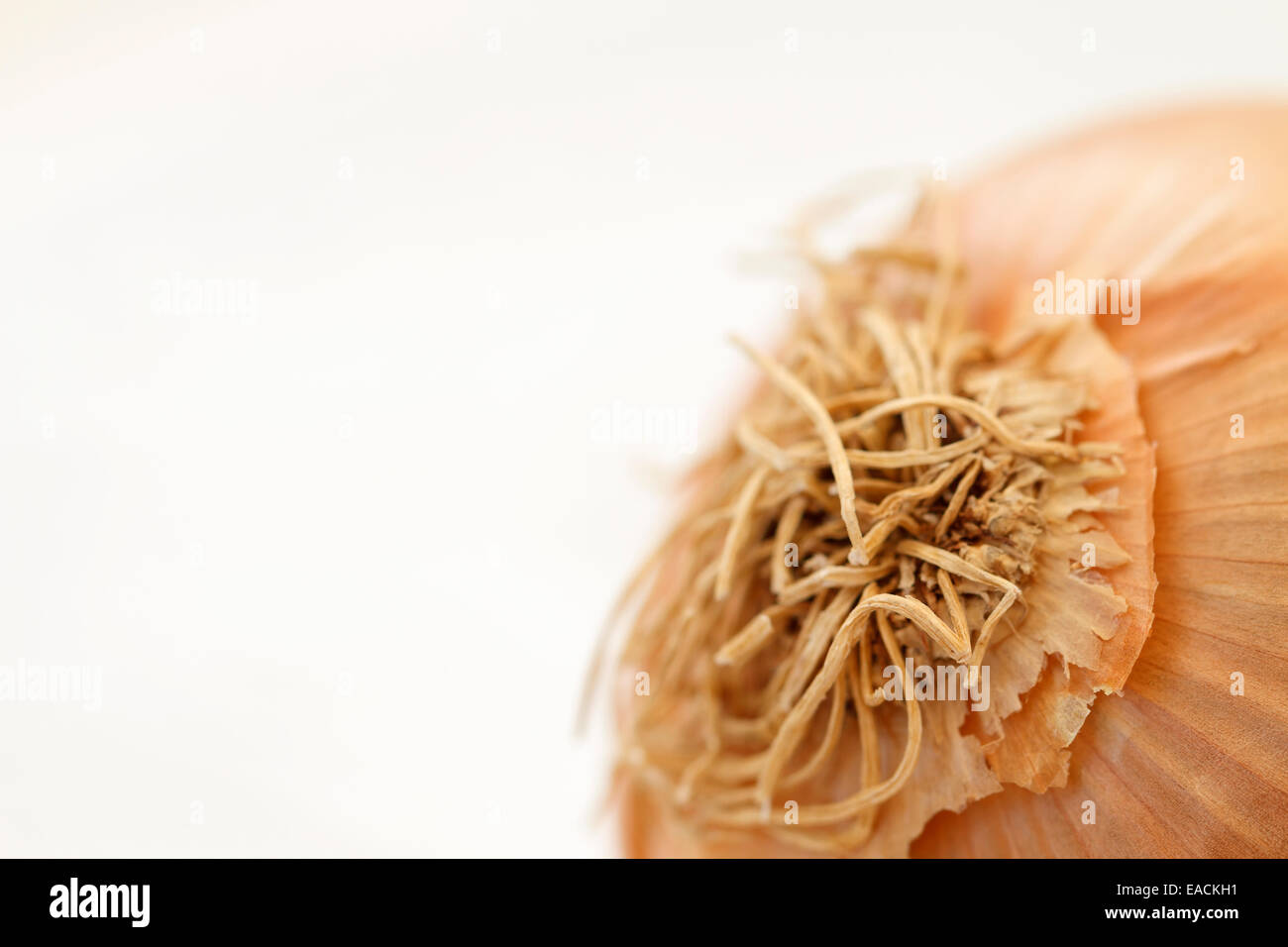 Onion, close up. - Stock Image