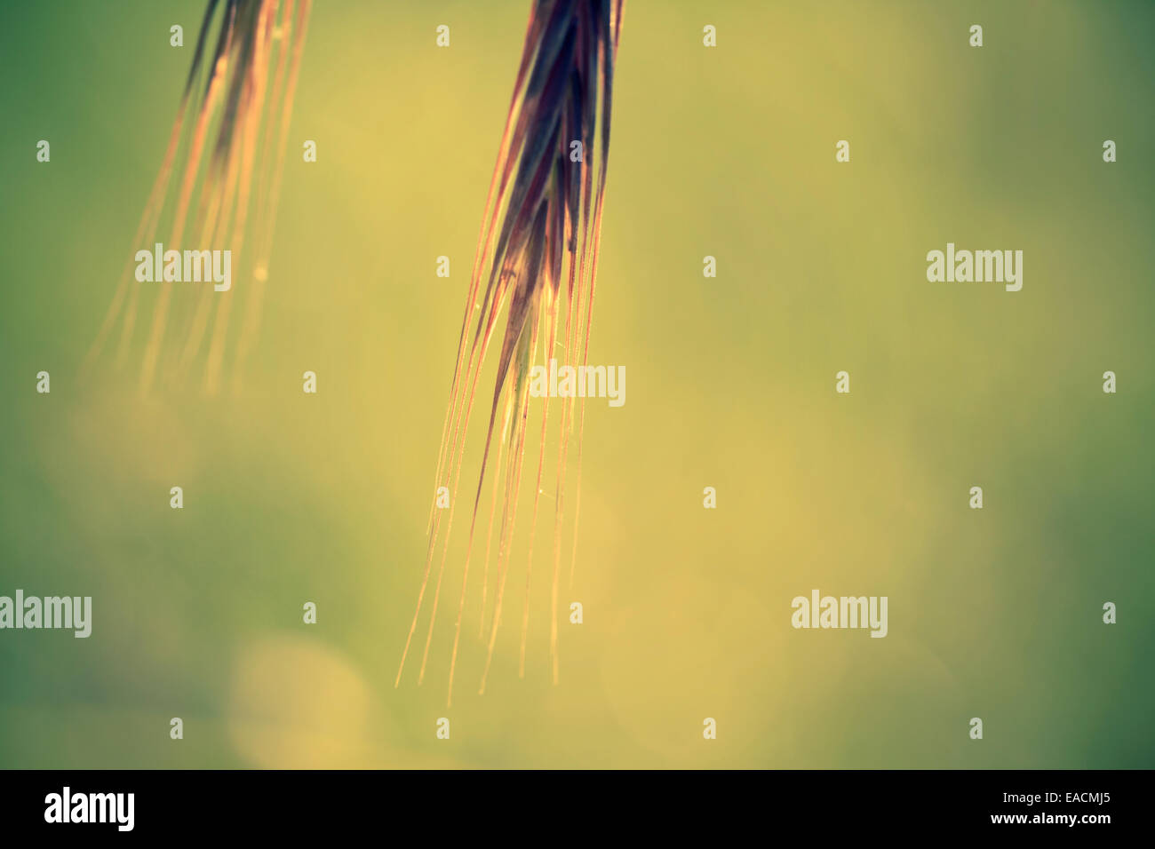 head plant sunshine - Stock Image