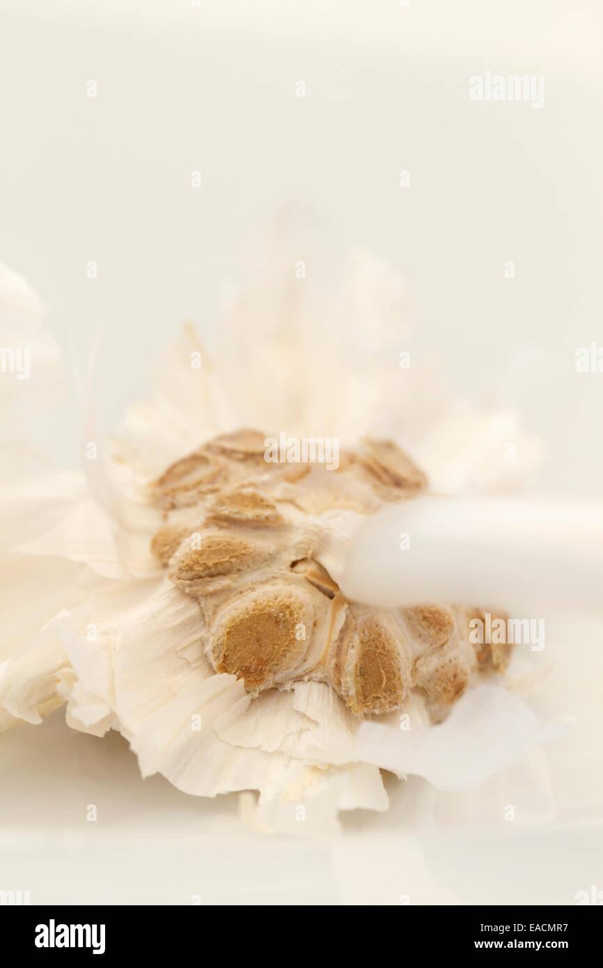 Garlic bulb, close up. - Stock Image