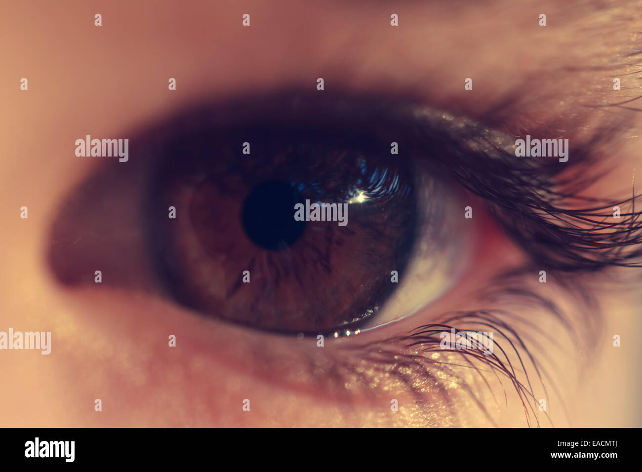 extreme close-up of an eye's 8 years boy. - Stock Image