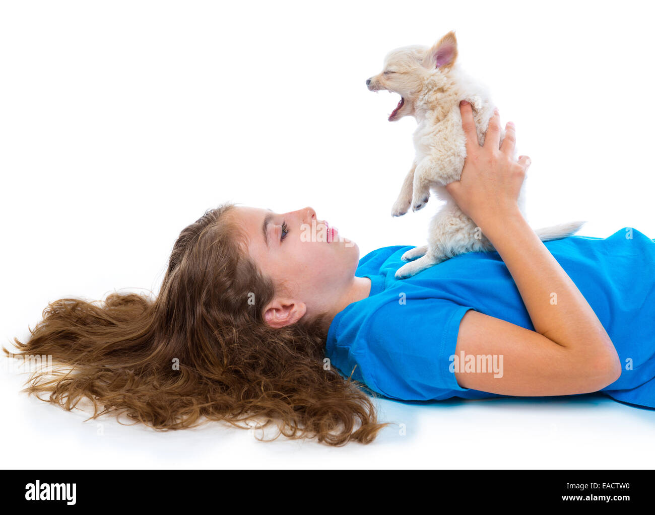 relaxed kid girl and puppy yawning chihuahua dog lying happy on white background - Stock Image