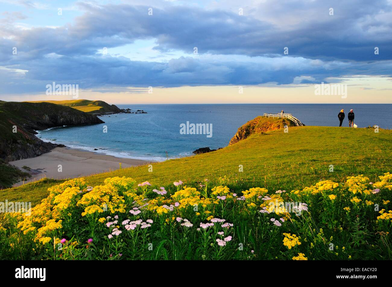 Meadow near the viewpoint overlooking the beach of Sango Bay, Durness, Caithness, Sutherland and Easter Ross, Scotland - Stock Image