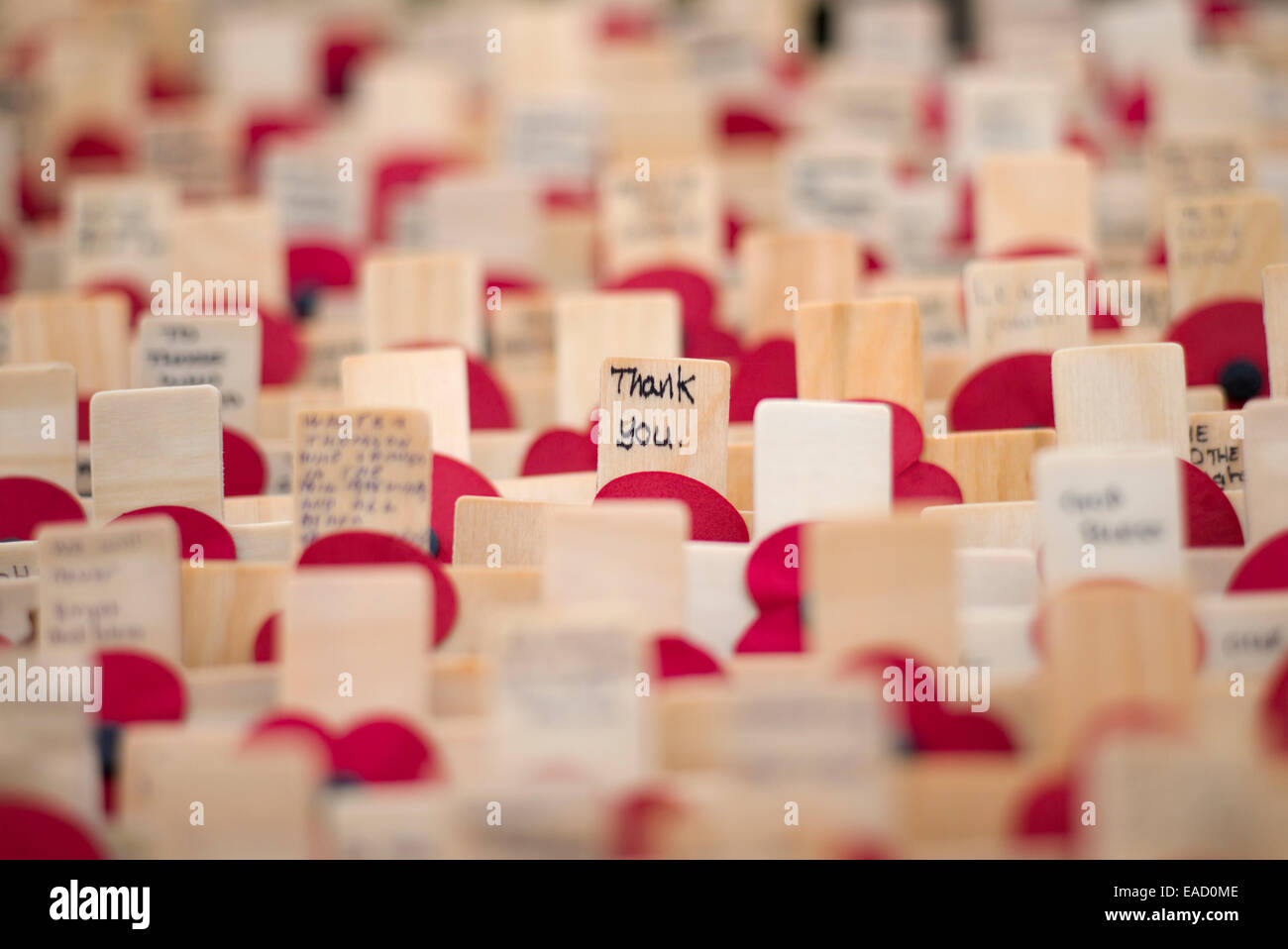 Thank You. Remembrance crosses and poppies - Stock Image