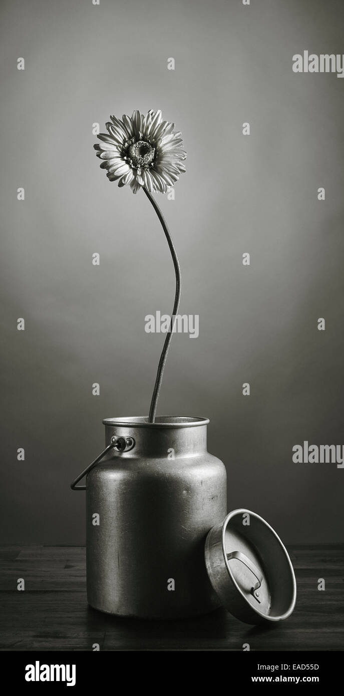 The growth of the power, flower growing upward - artificial flower inside the can, tinted black and white image - Stock Image