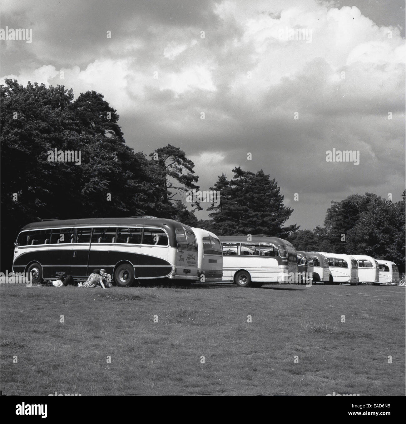 historical. 1950s, line of tourist coaches in a field. - Stock Image