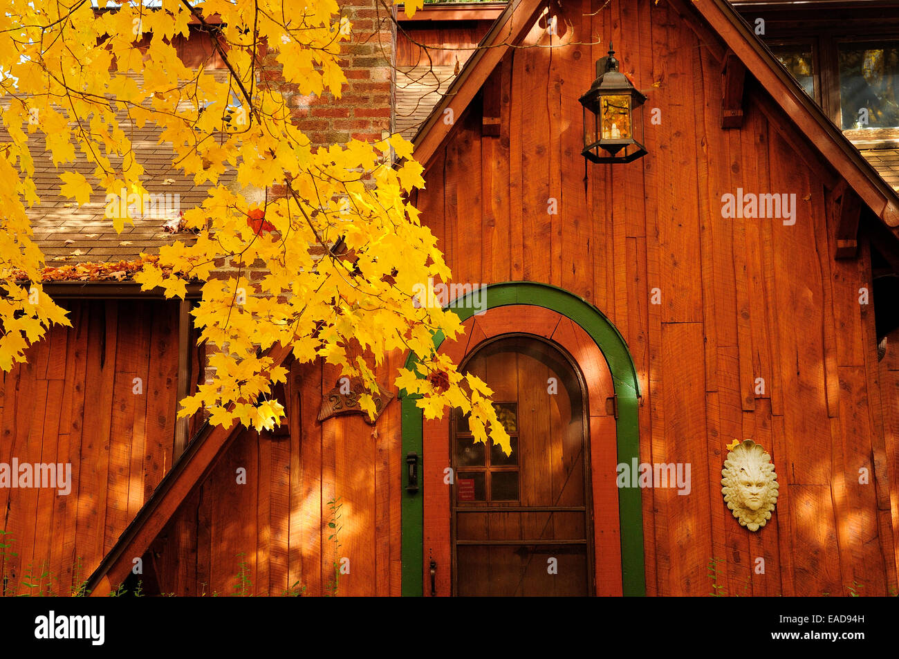 Autumn cottage with Norway maple tree in full bloom.  (Acer platanoides) - Stock Image