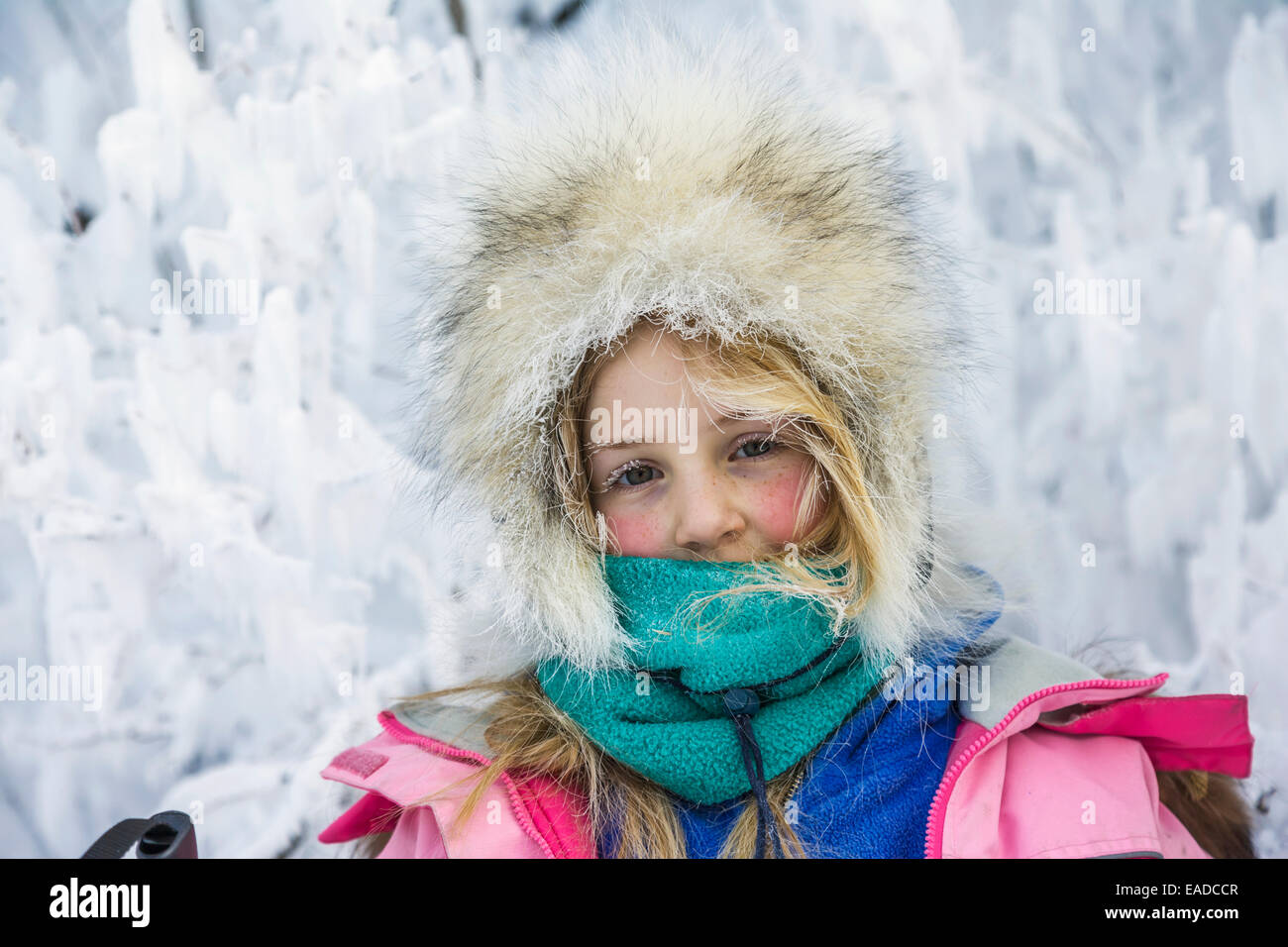 Young girl dressed in warm winter clothing by frost covered branches, Wiseman, Alaska - Stock Image