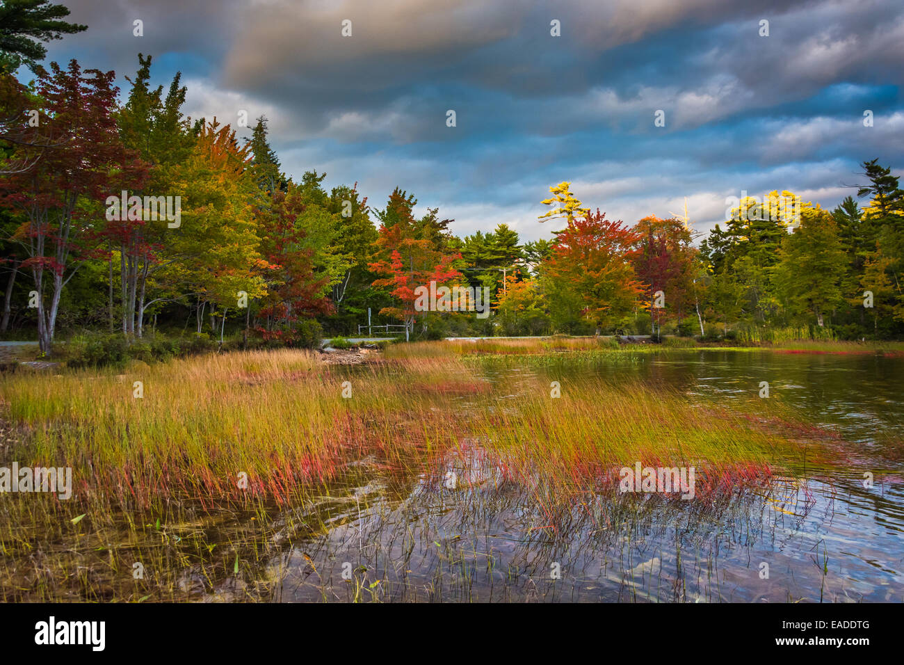 Autumn color at Eagle Lake, in Acadia National Park, Maine