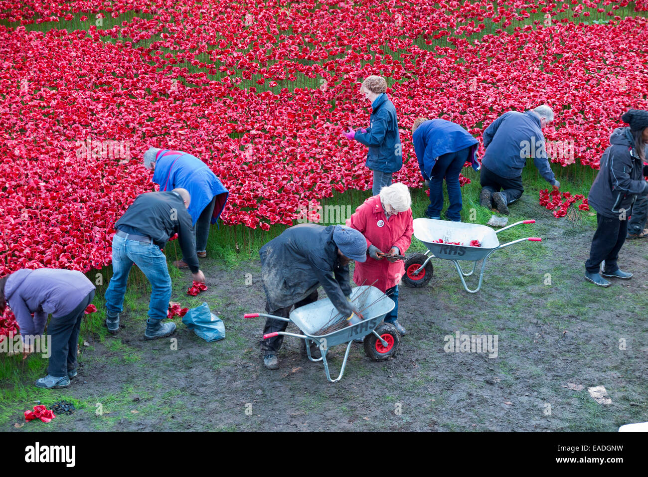 London, UK. Wednesday 12 November 2014. Volunteers removing some of the 888,246 ceramic poppies which formed the - Stock Image