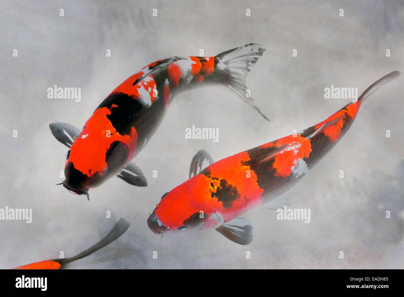 Koi Fish Painting Stock Photos & Koi Fish Painting Stock Images - Alamy