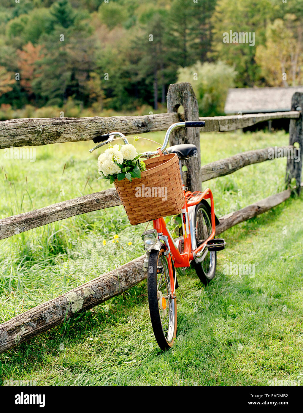 Orange Bicycle with Flowers In Basket, Hudson Valley, NY - Stock Image