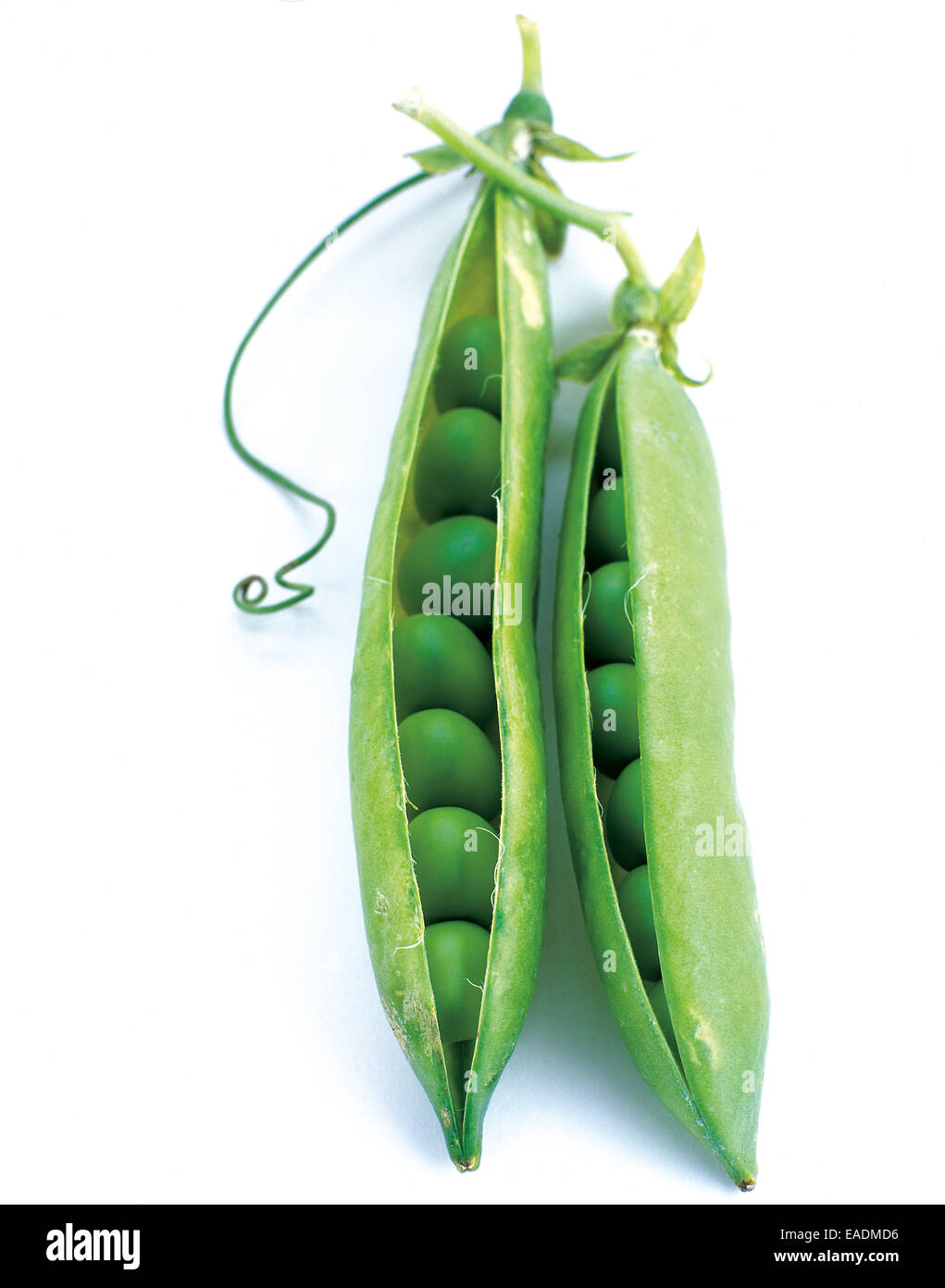 peas in their pods - Stock Image