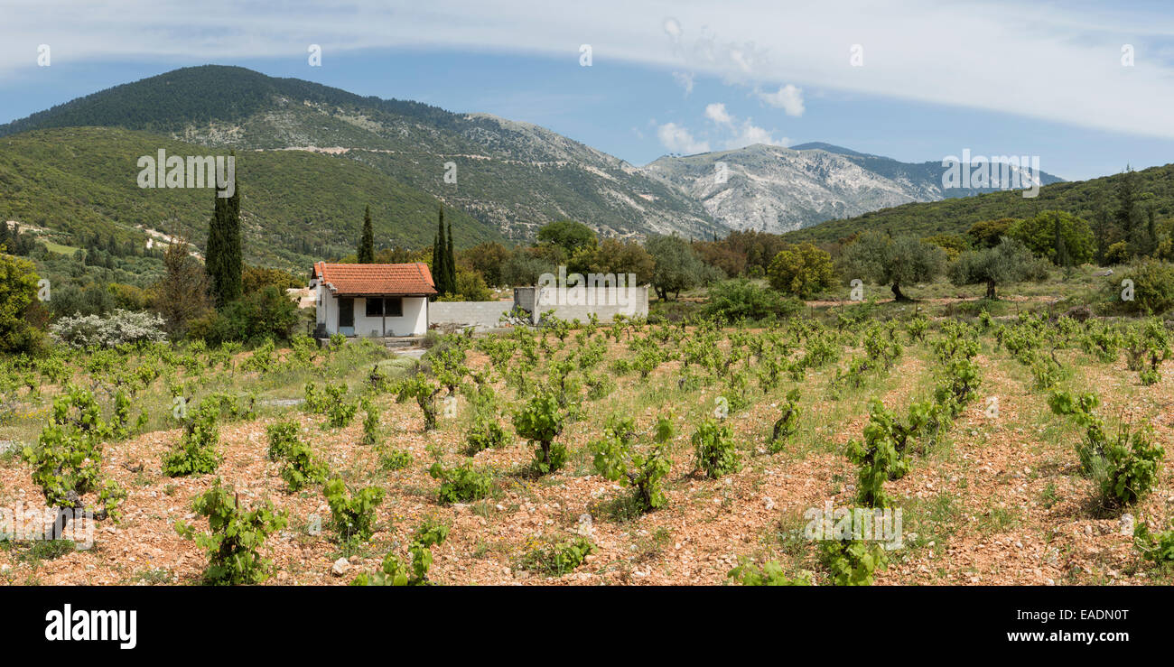 A vinyard in the mountains near Fragata, Kefalonia. Stock Photo