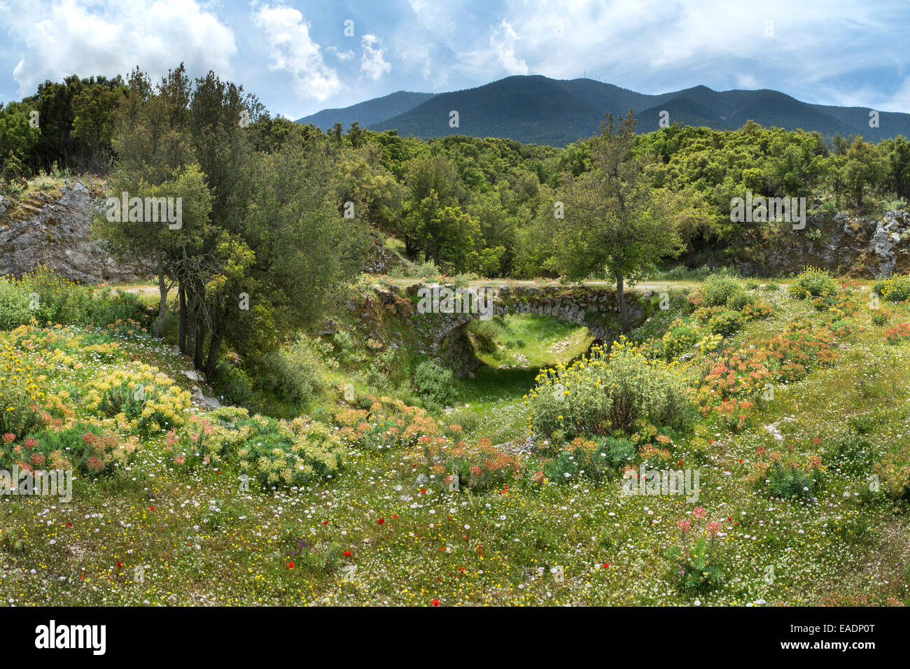 Beautiful wildflowers surround an old stone bridge near Digalet, Kefalonia. Mount Aenos can be seen in the background. Stock Photo