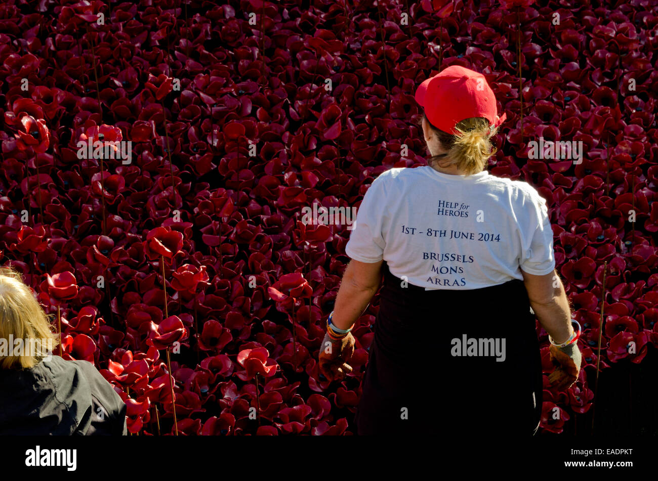 London, UK. 12th Nov, 2014. The first day of the removal process, volunteers work carefully to remove the poppy Stock Photo
