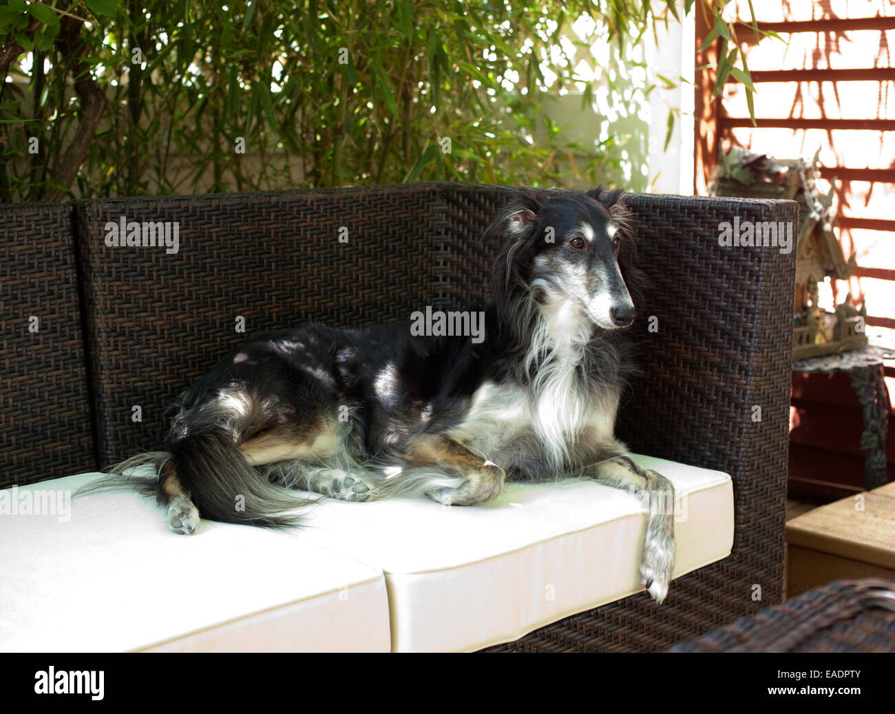 Dog reclining on outdoor furniture on porch at home - Stock Image - Outdoor Furniture Stock Photos & Outdoor Furniture Stock Images - Alamy