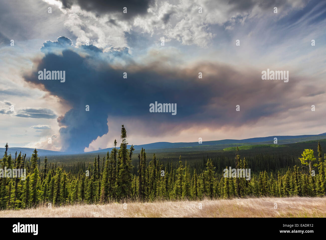 Fairbanks,Forest Fire,Hastings,Disaster - Stock Image