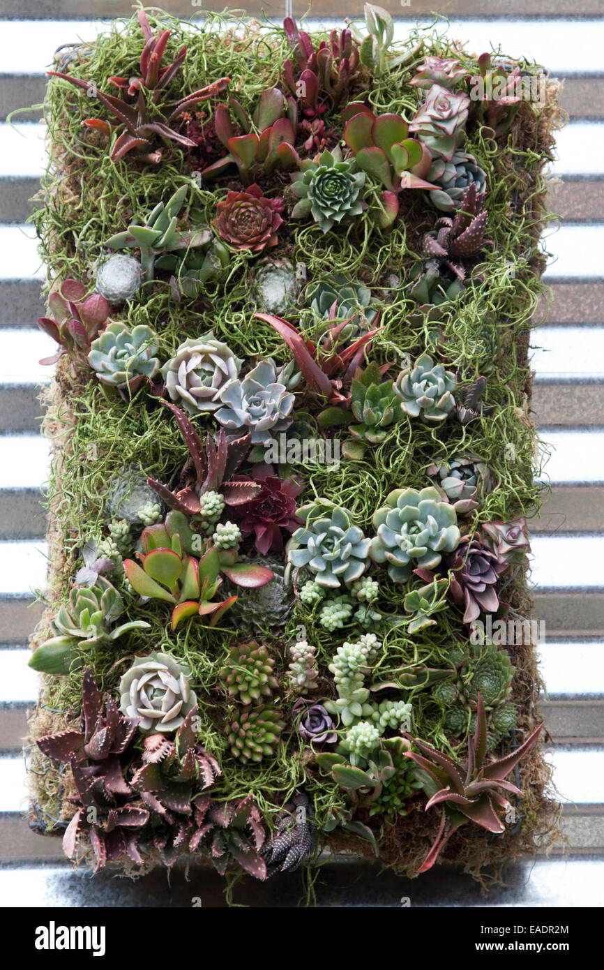 Succulent Green Wall Hanging Stock Photo Alamy