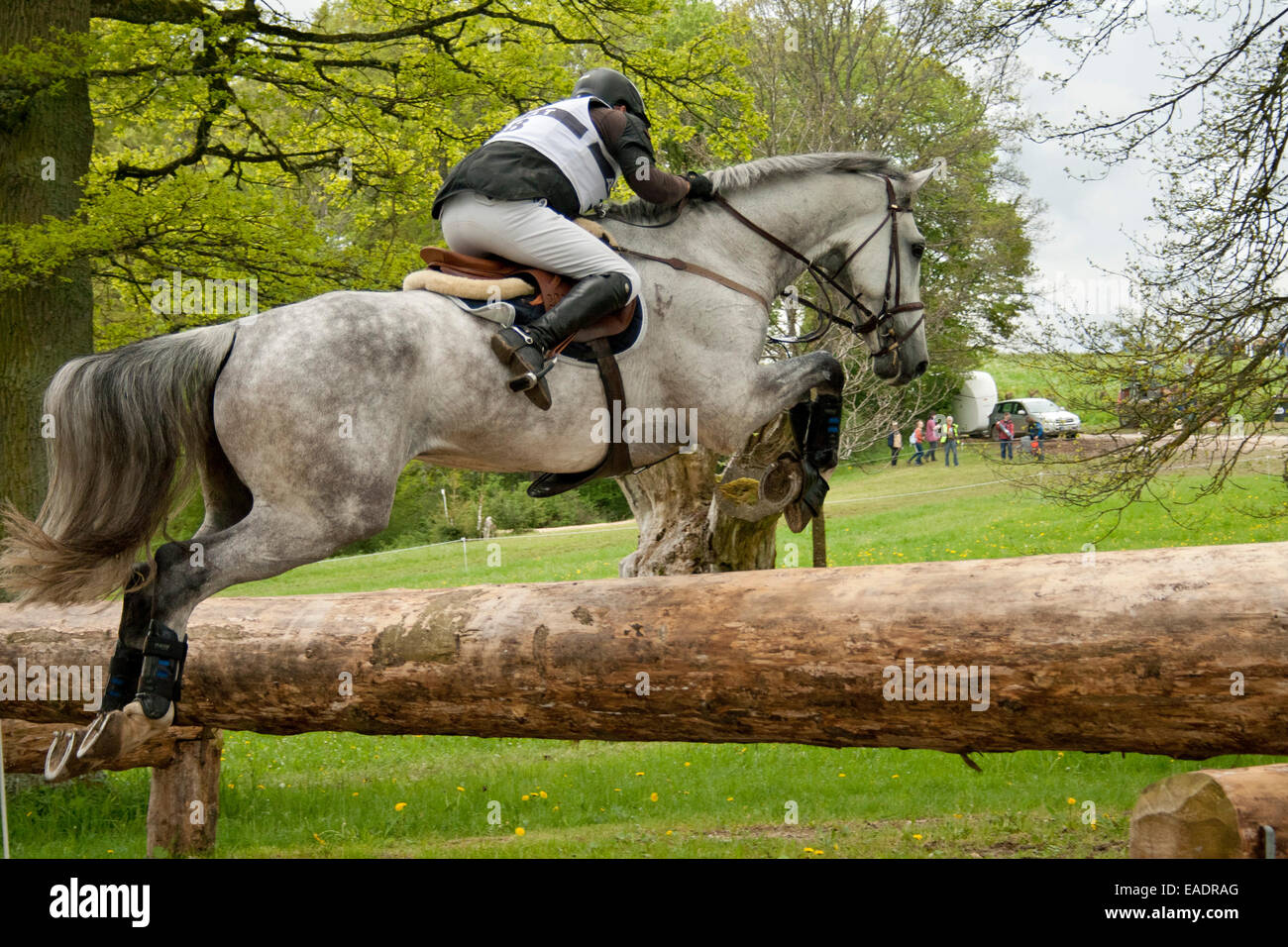 Jumping horse Stock Photo
