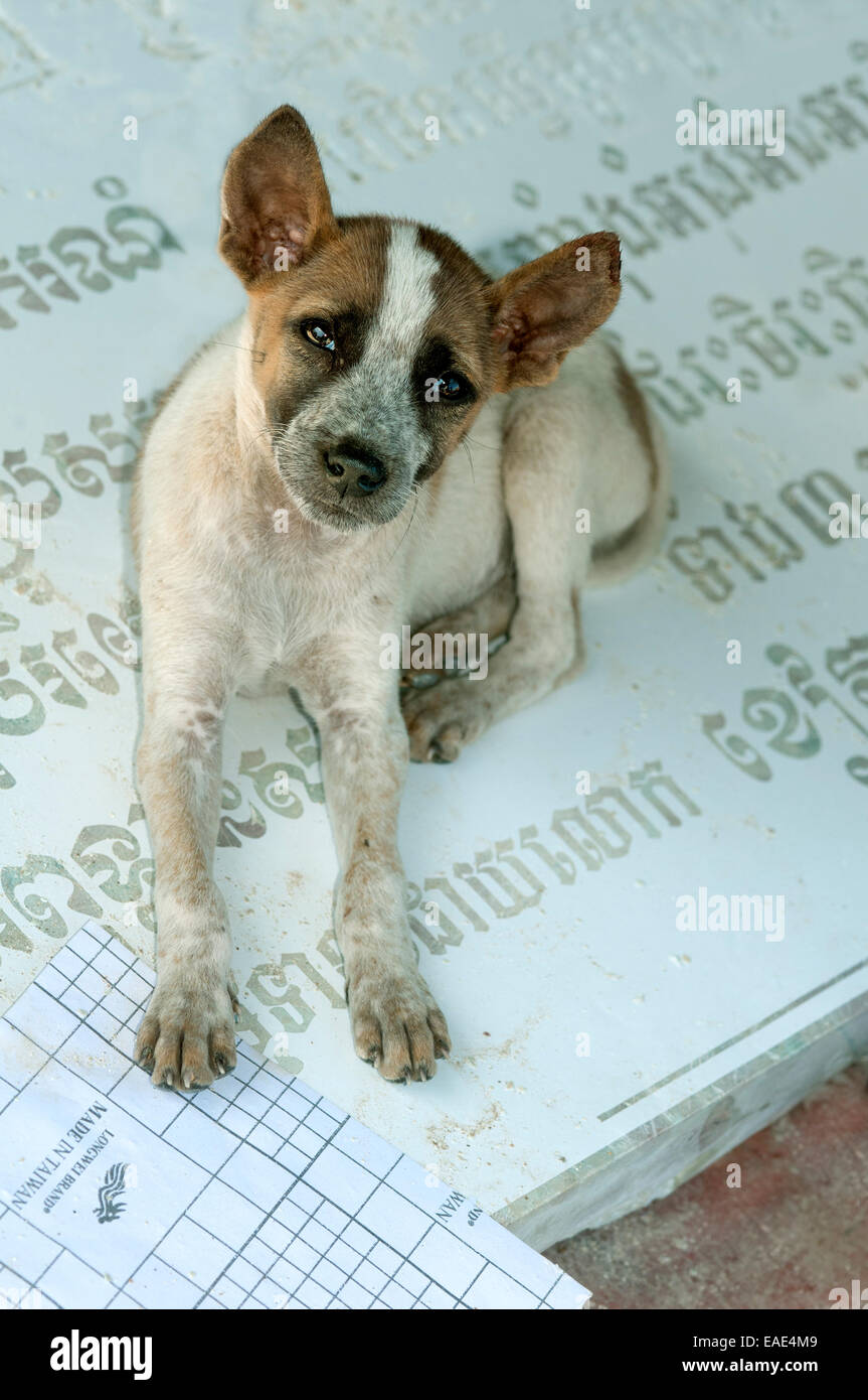 Small dog sitting on a gravestone with Khmer characters which is lying on the ground in a stone cutting factory, - Stock Image