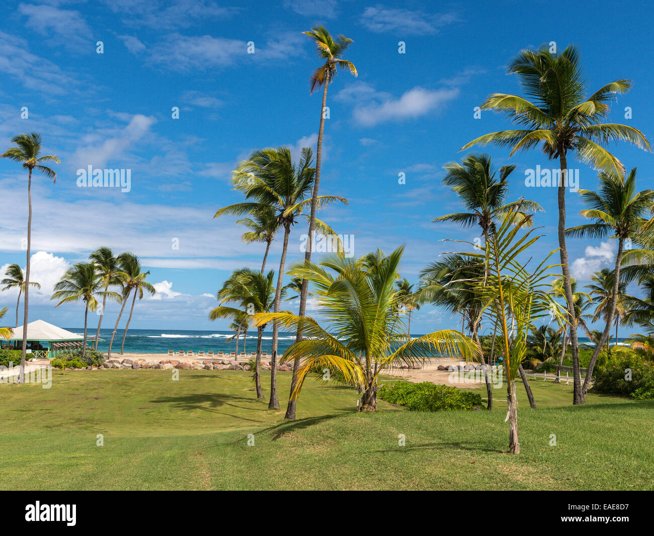 Landscape depicting Long Haul Beach, Nevis. Palm tree groups in foreground with beach, Caribbean sea and blue sky - Stock Image