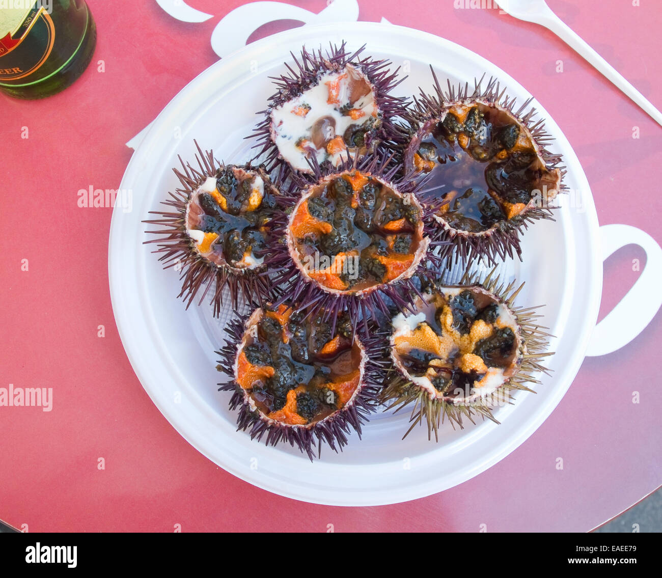 fresh sea urchin stock photo 75306541 alamy