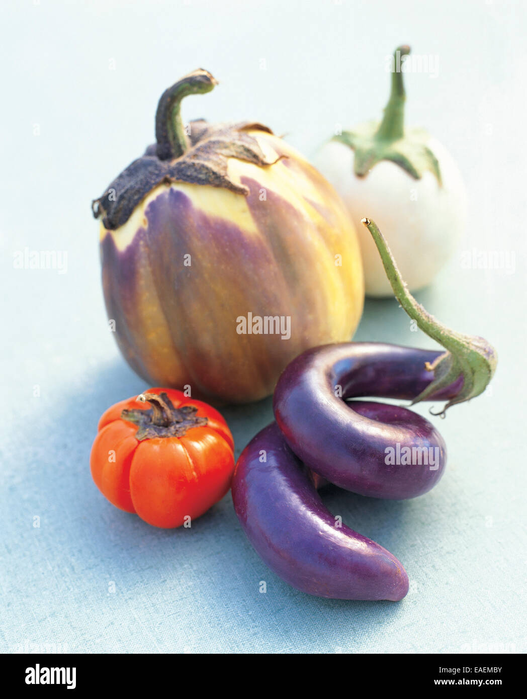 Variety of Eggplants on Blue - Stock Image
