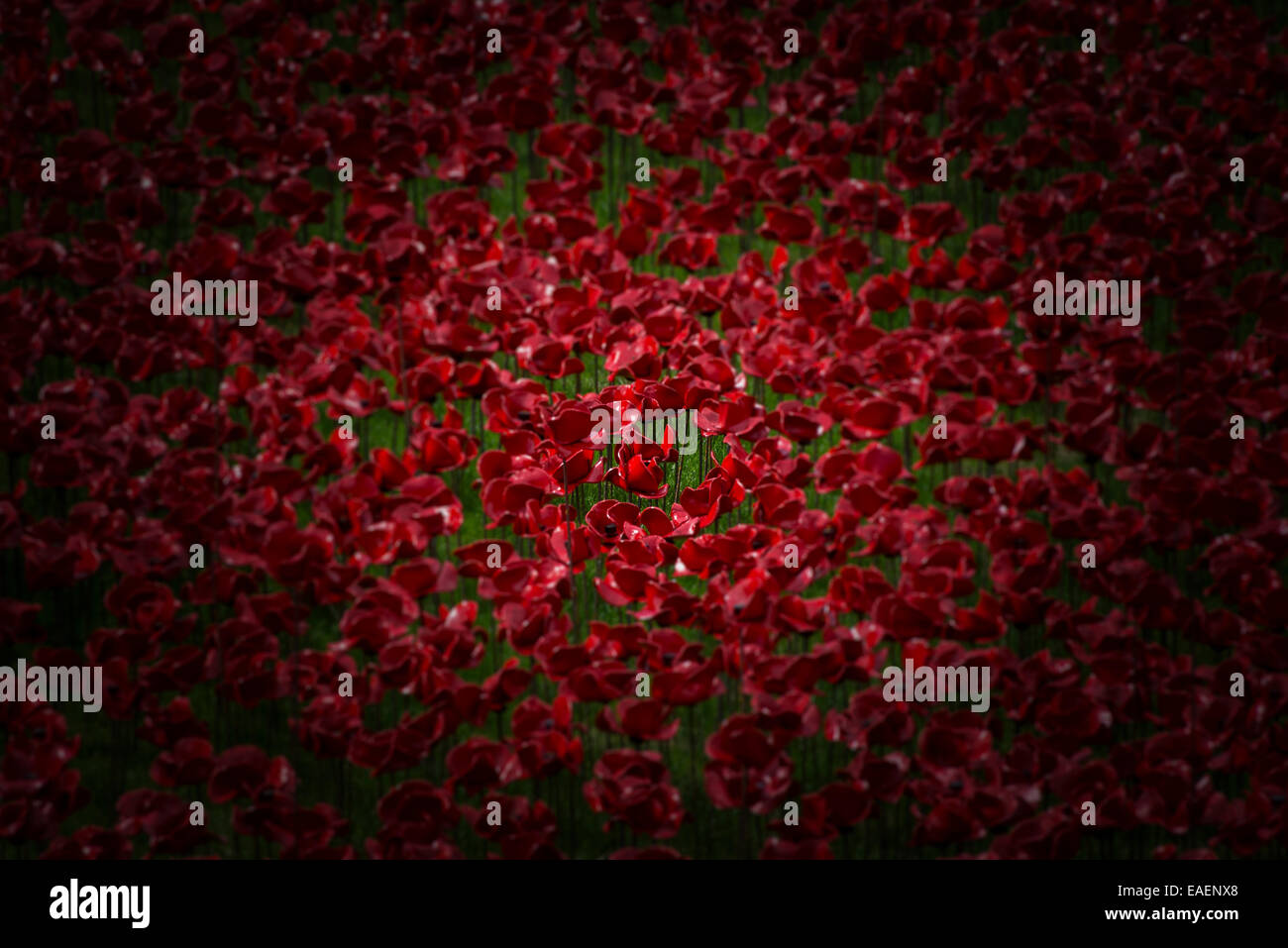 'Amongst the many the individuals' -  a vignette of the 888,246 poppies in the 'Blood Swept Lands and - Stock Image