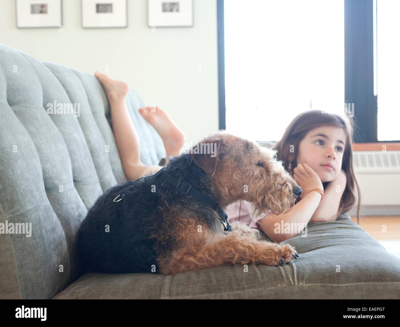 Young girl and dog on couch at home. - Stock Image
