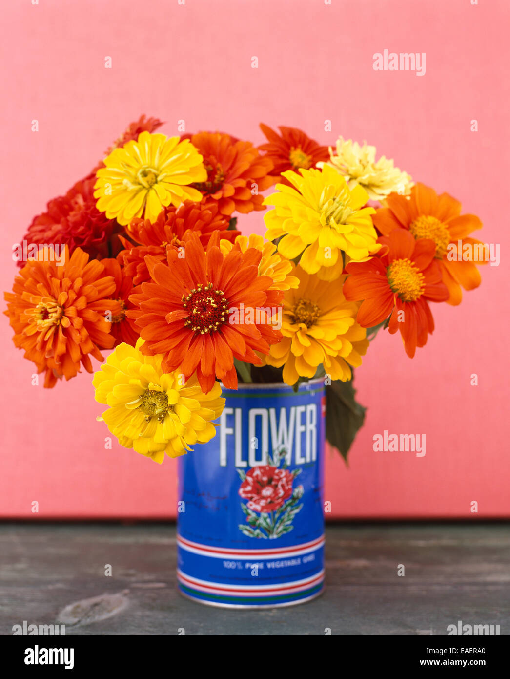 a bouquet of brightly colored zinnias in a blue tin can with pink background - Stock Image