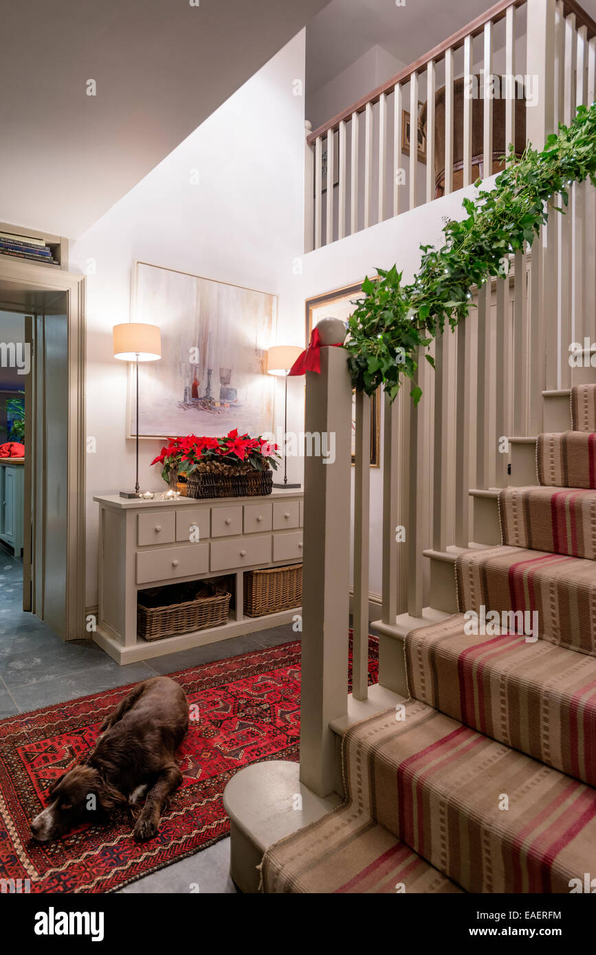 Ivy wrapped around stair banister and tray of poinsettas adds a festive seasonal touch to a hallway - Stock Image