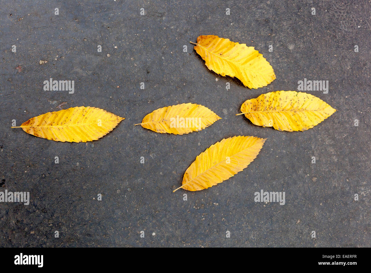 direction arrow yellow leaves - Stock Image