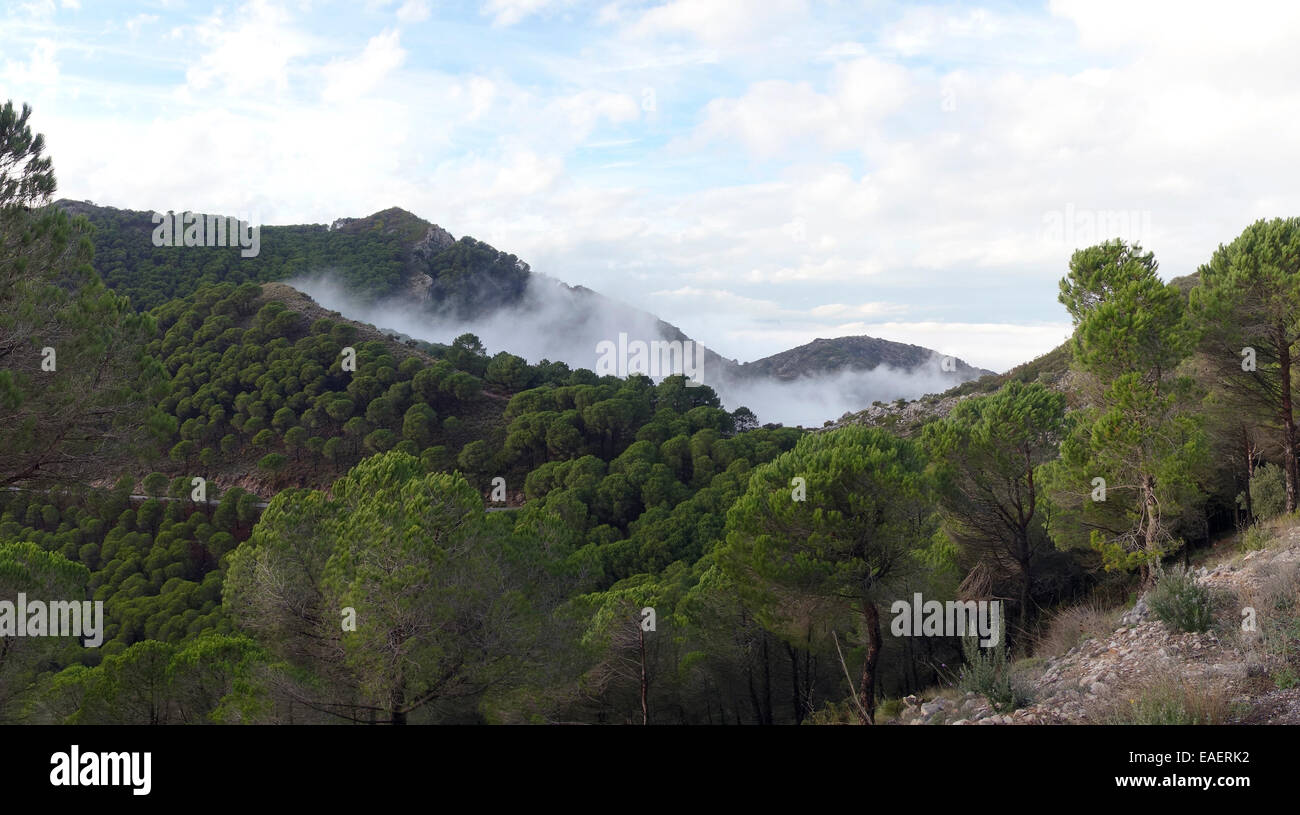 Low stratus clouds  pushed up in Mountains of Mijas, Fog mist. Andalusia. Spain. Stock Photo