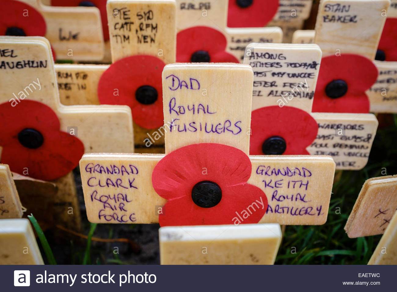 Westminster Field of Remembrance, Westminster Abbey, London, UK - Stock Image