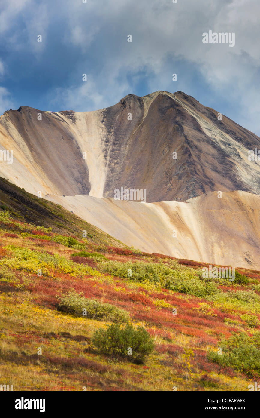 Autumn colors over the tundra in Sable Pass, Denali National Park, interior, Alaska. - Stock Image